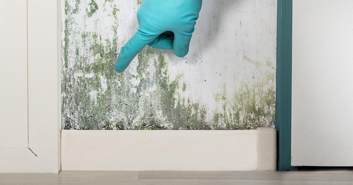 Cara Menghilangkan Jamur dan Lumut di Tembok Rumah