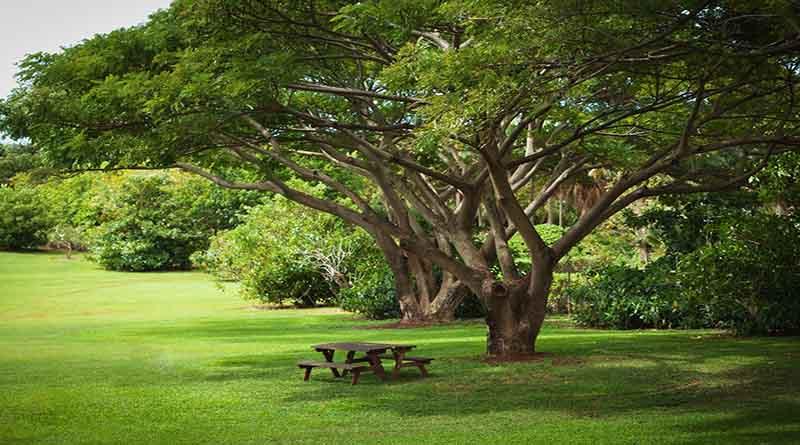 5 Rekomendasi Pohon Peneduh untuk Rumah yang Lebih Adem