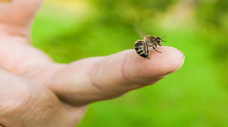 4 Cara Ampuh untuk Membasmi Serangga Menyengat