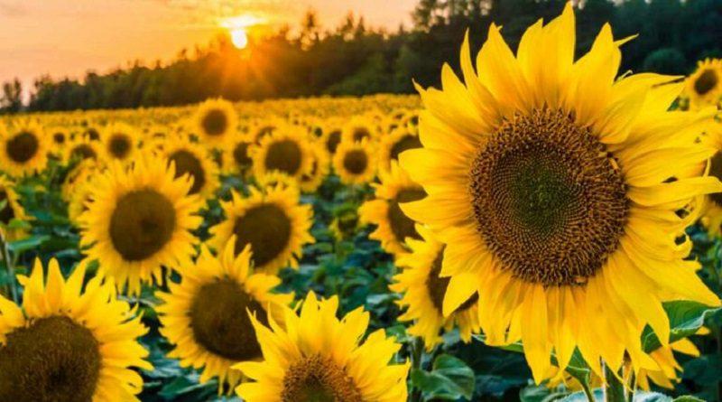 9 Jenis Bunga Cantik untuk Taman di Rumah