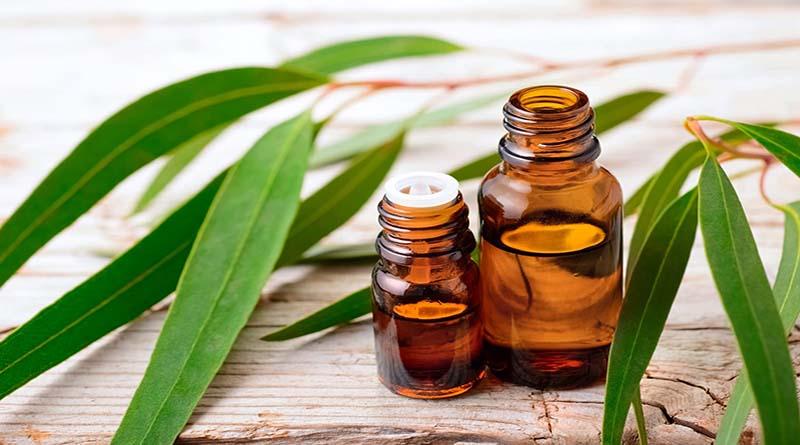 Cek 8 Manfaat Minyak Kayu Putih untuk Kesehatan Tubuh di Sini!