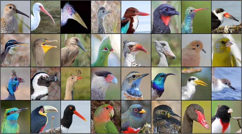 apa itu burung