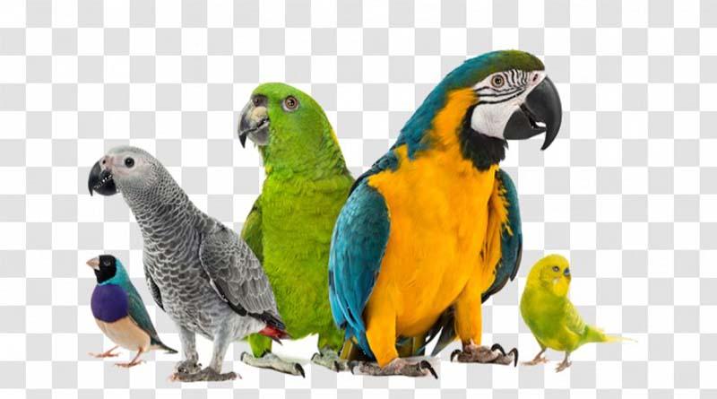 8 Jenis Burung Jinak yang Bisa Dipelihara di Rumah