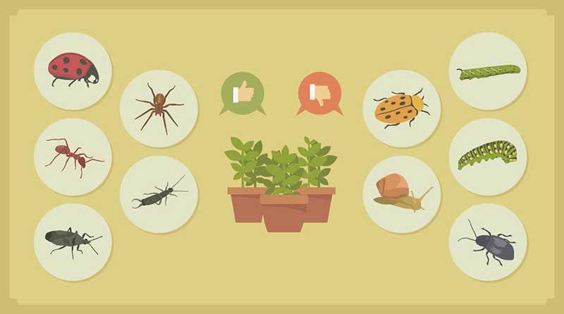 6 Pestisida Alami Buatan Sendiri untuk Membasmi Hama