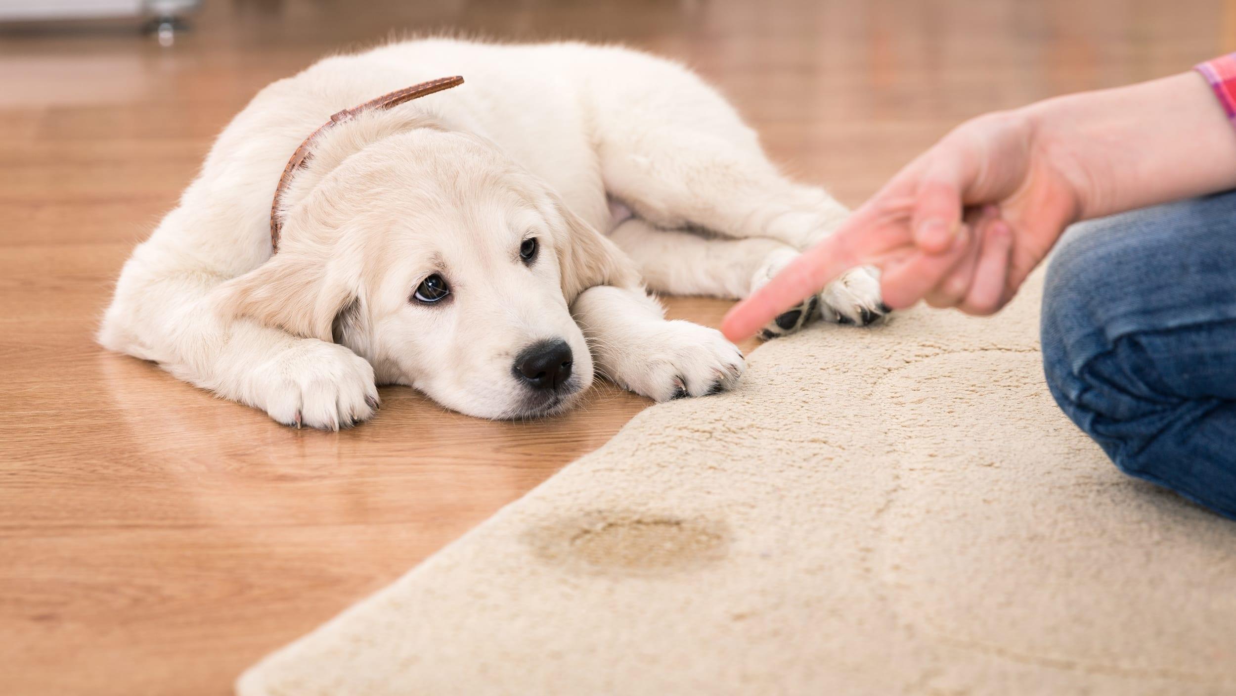 9 Cara Cepat Dan Praktis Untuk Membersihkan Karpet