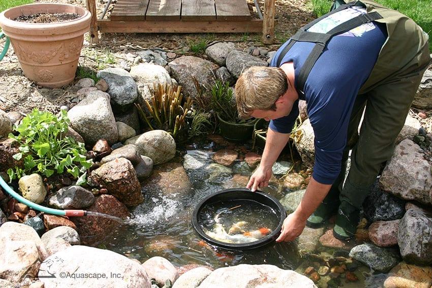 3 Hal Penting yang Wajib Dilakukan Sebelum Membersihkan Kolam Ikan