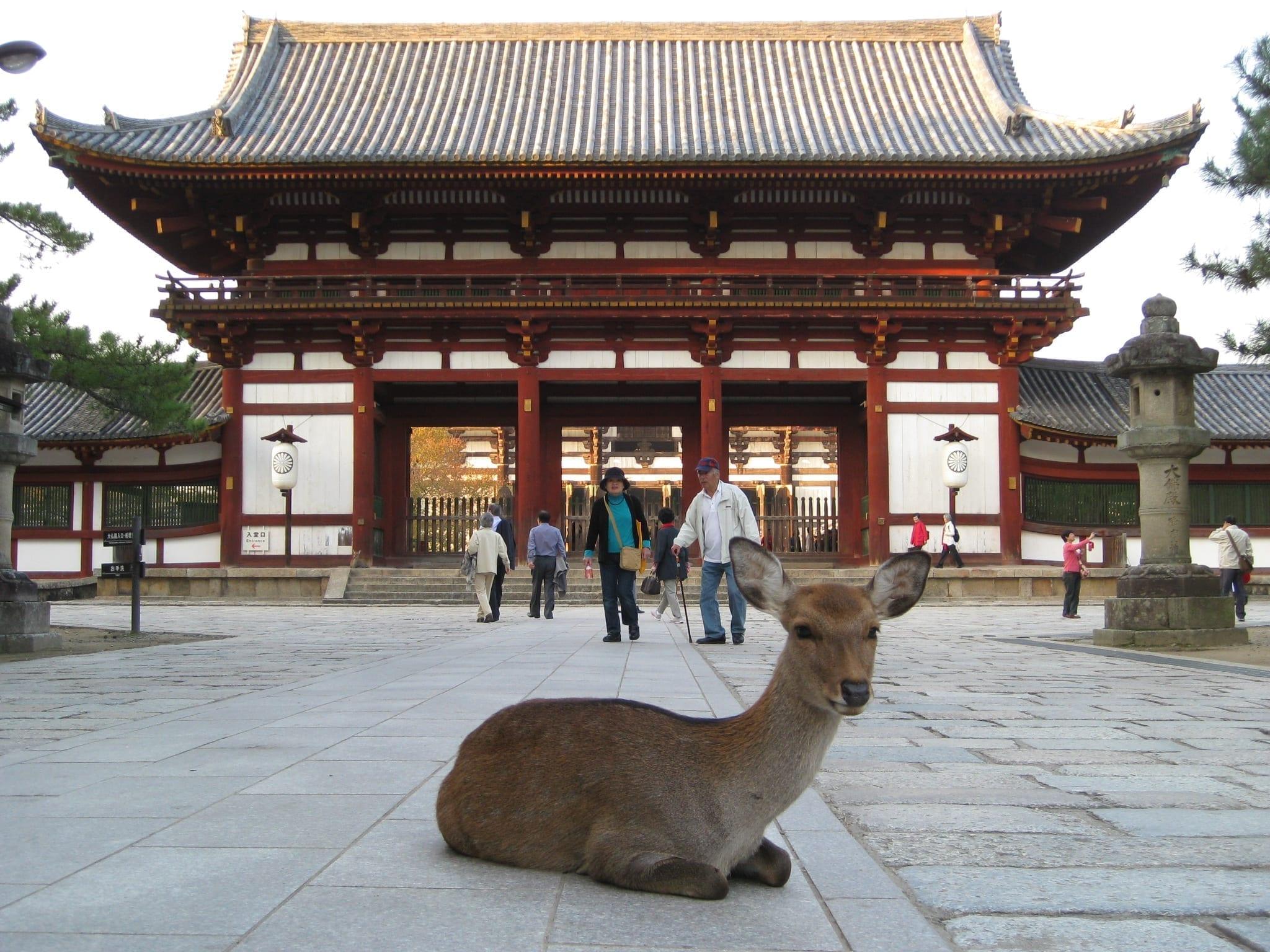 Fakta Mencengangkan Tentang Rumah Di Jepang!