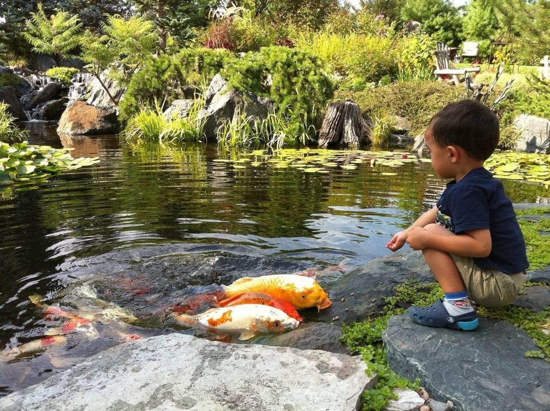 5 Cara Cepat untuk Membersihkan Kolam Ikan