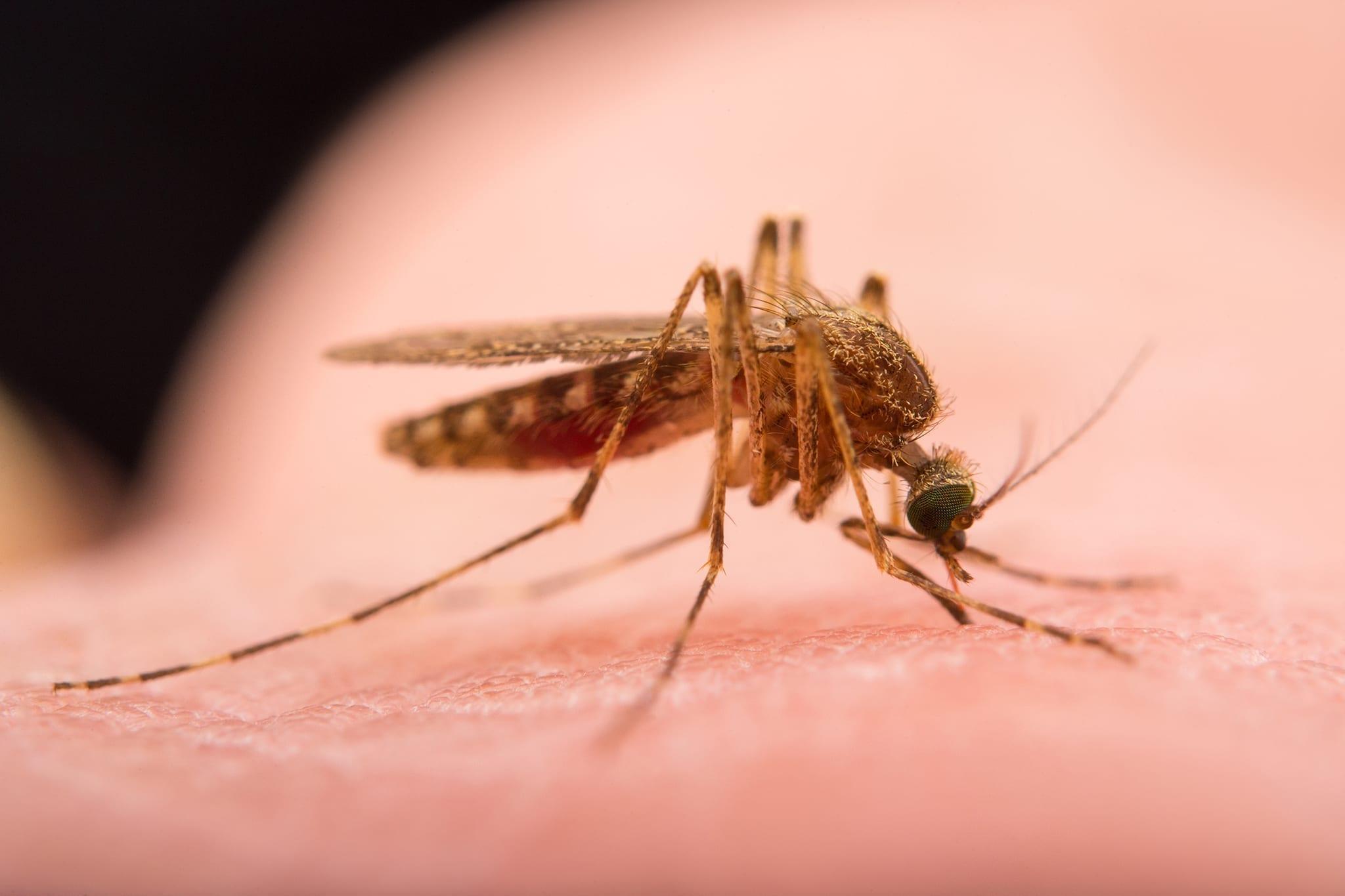 Tips Cepat dan Alami untuk Membasmi Nyamuk!