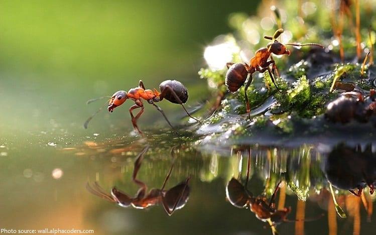Fakta Menakjubkan Tentang Semut