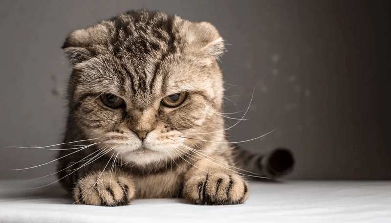 Cara Mengusir Kucing dari Rumah, Ampuh!