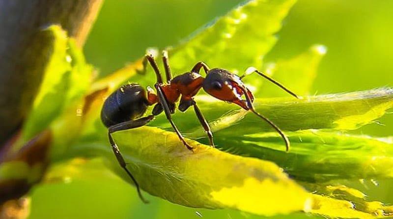 Semut Penjelasan Serta Fakta Menarik Tentangnya Kliknclean