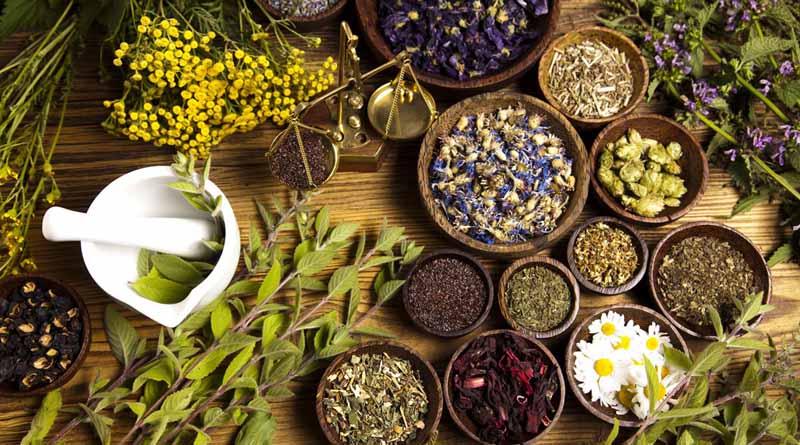 tanaman yang jadi obat alami